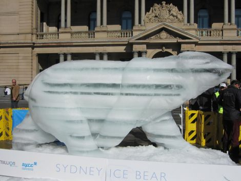 Sydney+Ice+Bear+1