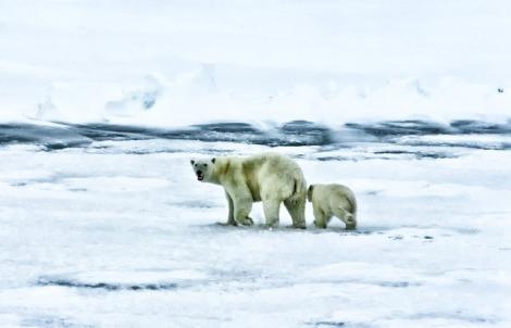 arctic-139397_640