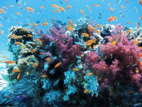underwater-123282_640